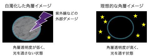 白濁化した角層:角層透明度が低く、光を通さない状態。理想的な角層イメージ:角層透明度が高く、光を通す状態。